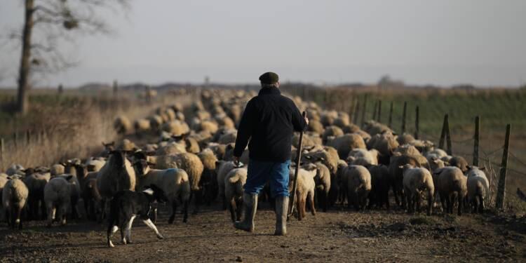 """""""Continuer à travailler"""" ou """"plumer les réserves"""": la """"débrouille"""" des agriculteurs retraités"""
