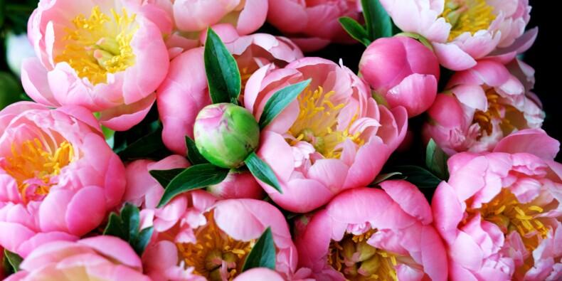 Au marché aux fleurs de Hyères, la pivoine objet de convoitises mondiales