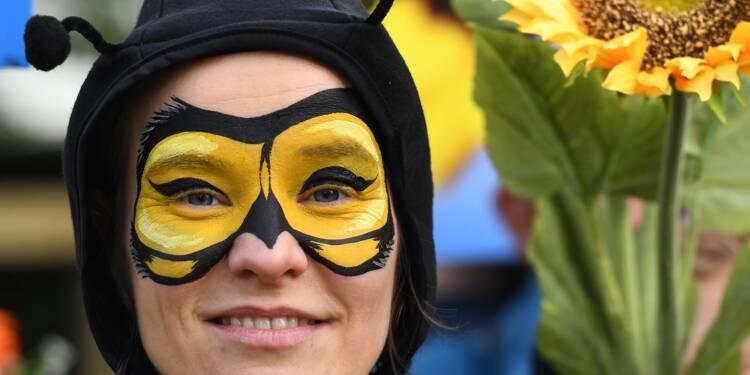 L'UE bannit des néonicotinoïdes pour sauver les abeilles