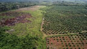 Bras de fer sur l'huile de palme entre l'UE et l'Asie du Sud-Est