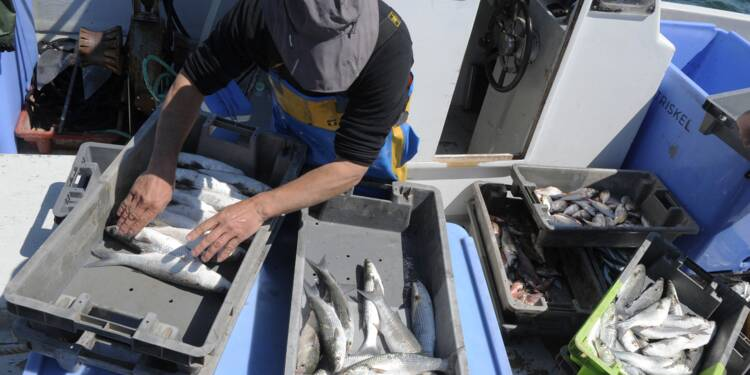 Au Cap Roux, les pêcheurs s'impliquent dans la protection des poissons