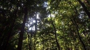 Disparition accélérée des forêts vierges de la planète