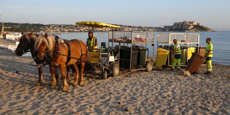 A Calvi, une hippomobile ramasse les poubelles des restaurants de plage
