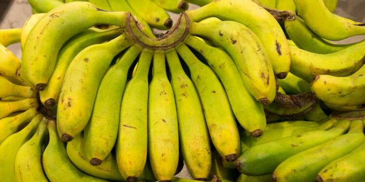 Chlordécone/bananes: le gouvernement va revoir les limites autorisées dans les aliments