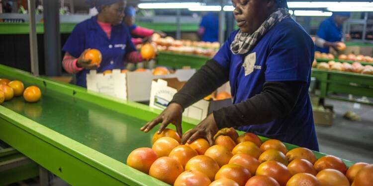 L'Afrique du Sud veut accélérer les expropriations de terres agricoles