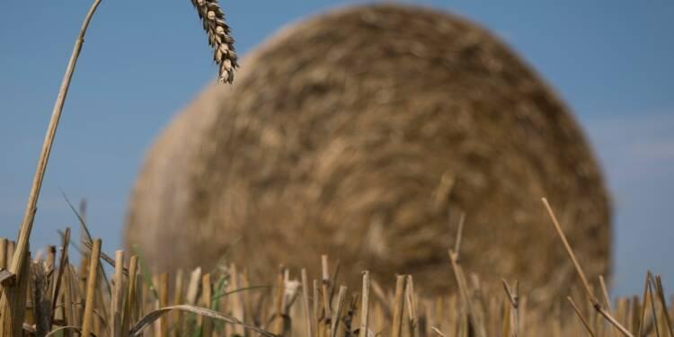 La sécheresse fait flamber le blé et les céréales sur les marchés mondiaux