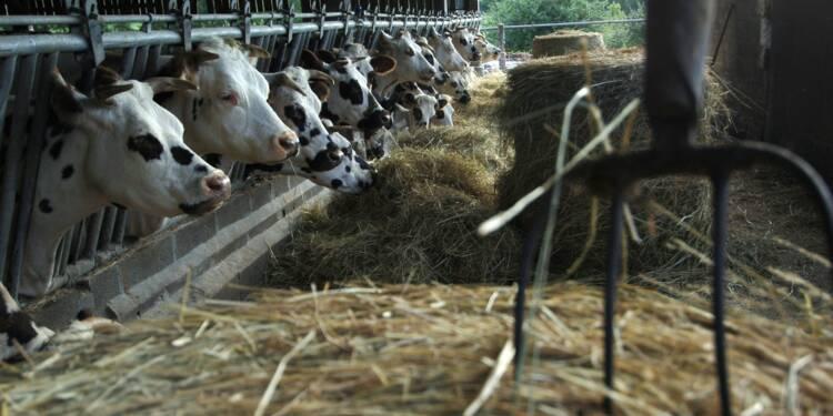 L'exportation de vaches normandes vers l'Iran contrarié par les sanctions américaines