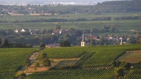 En Alsace, vignerons et bénéficiaires du RSA font vendanges communes