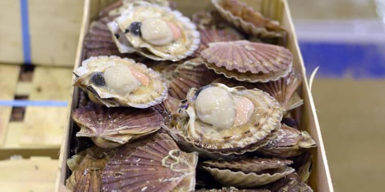 Coquille Saint-Jacques: blocage des négociations entre pêcheurs britanniques et français