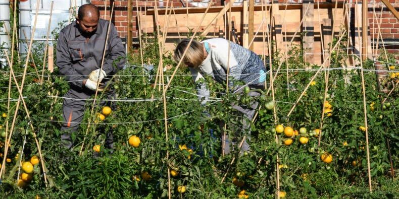 A Loos, le maraîchage pour combattre le chômage de longue durée