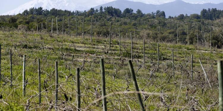 Corse: un des plus grands domaines viticoles en liquidation vendu à un organisme semi-public