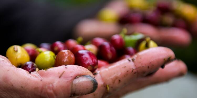 Café, un commerce encore moins équitable en période de crise
