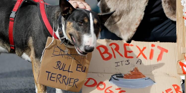 """""""Ouaférendum"""": chiens et maîtres défilent à Londres contre le Brexit"""