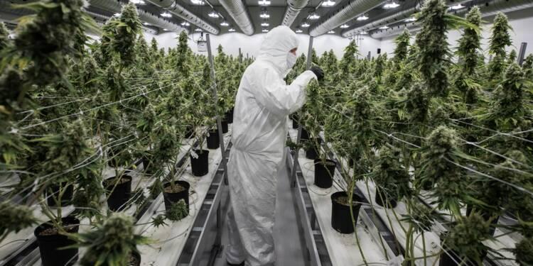 Canada: compte à rebours vers une légalisation historique du cannabis
