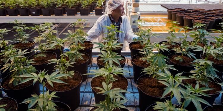 Le Canada légalise le cannabis, les premiers clients sur un nuage