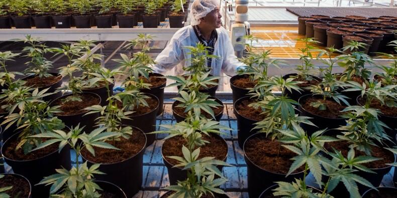 Après un siècle de prohibition, le Canada légalise le cannabis