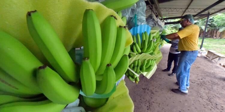 L'Equateur pour un front régional contre une baisse du prix de la banane