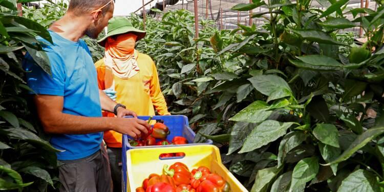 Les agriculteurs israéliens inquiets pour leurs serres en Jordanie