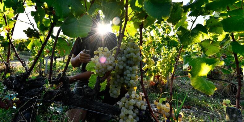 La production mondiale de vin en net rebond en 2018, après une année catastrophique