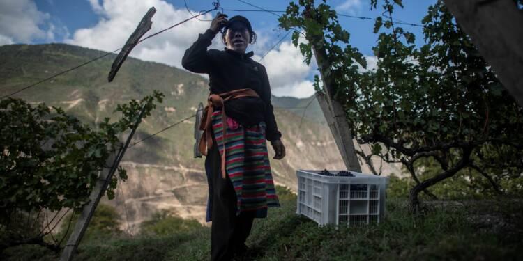 """Face à l'Himalaya, un vin chinois vole """"au-dessus des nuages"""""""