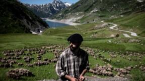 Danse avec les loups: une saison avec un berger dans les Alpes françaises