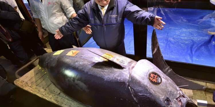 Japon : un thon vendu à prix d'or aux enchères pour le Nouvel An