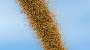 L'UE accepte l'importation de soja américain pour produire du biocarburant