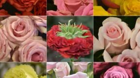 La Saint-Valentin, fashion week des roses d'Equateur