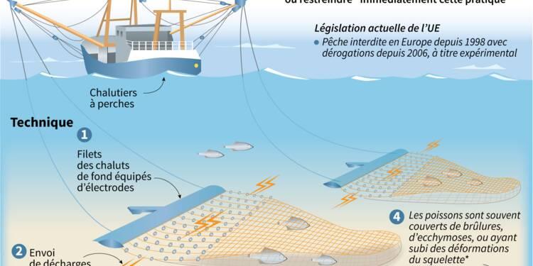 La France va anticiper l'interdiction de la pêche électrique dans ses eaux territoriales