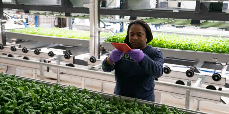 A New York, les salades high-tech des fermes verticales