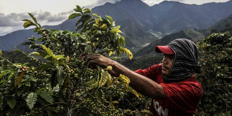 La Colombie veut vendre son café sans dépendre de New York