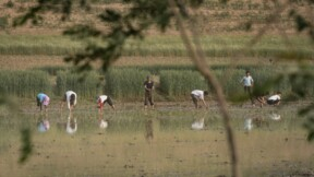 La production alimentaire nord-coréenne au plus bas en plus de dix ans, selon l'ONU