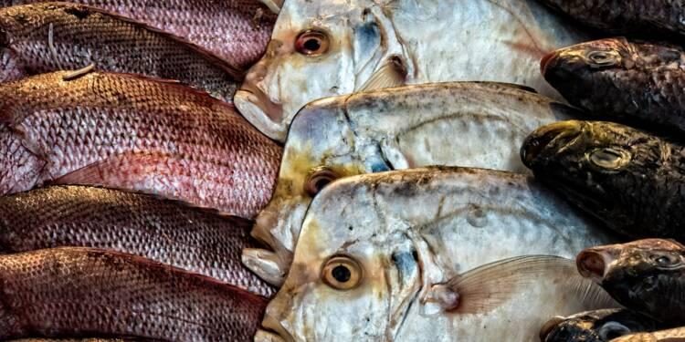 Fake news chez les poissons