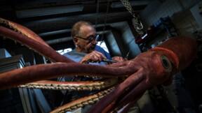 """Un calmar géant et un coelacanthe se font beaux pour l'expo """"Océan"""""""