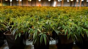 Les cosmétiques au cannabis fleurissent, malgré un flou juridique persistant