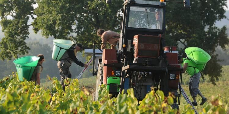 Les vins blancs de Loire à la conquête du marché américain