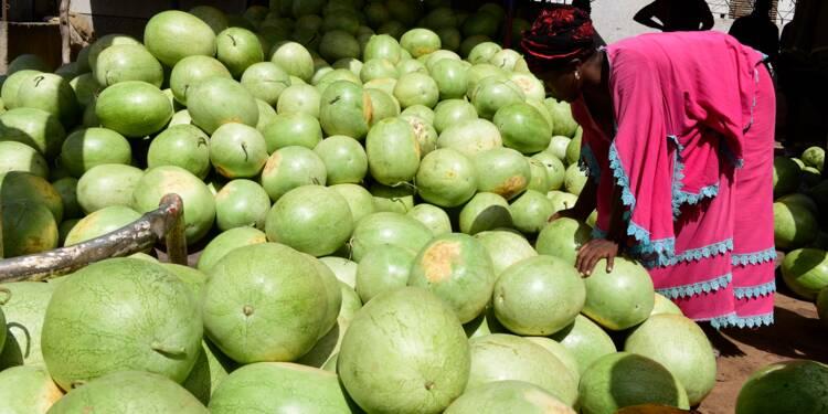 """L'intelligence artificielle et le """"big data"""" à la rescousse des agriculteurs africains"""