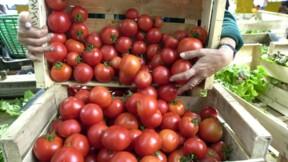 Fruits et légumes bio: Les esprits s'échauffent autour des serres chauffées