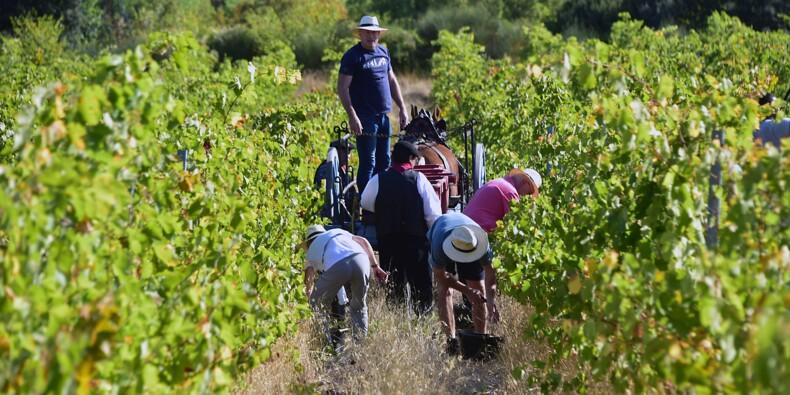 Donald Trump s'attaque de nouveau au vin français