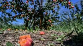 """Grêle sur la Drôme: récoltes """"foutues"""" et état de catastrophe naturelle"""