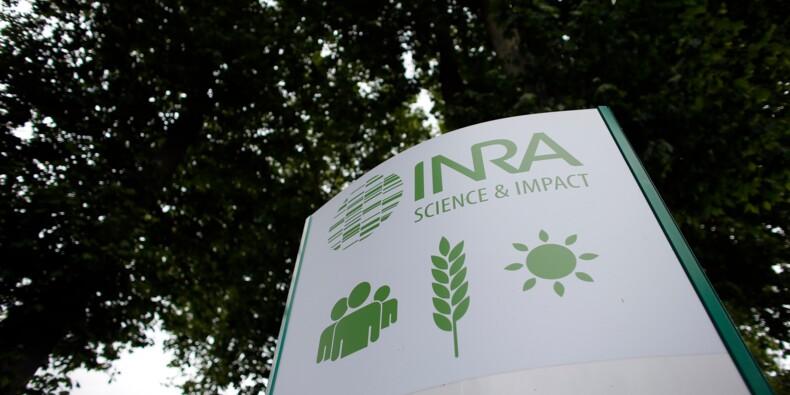 Plainte contre l'Inra après le décès d'une chercheuse dû à la maladie de Creutzfeldt-Jakob