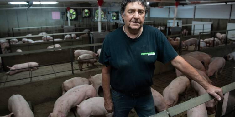 """Crise avec la Chine: un éleveur de porcs québécois se dit """"amer"""""""