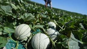 Agriculture: les dérives du recours aux travailleurs détachés