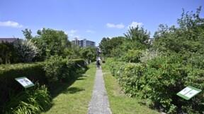 Les jardins ouvriers sous pression des promoteurs immobiliers à Berlin