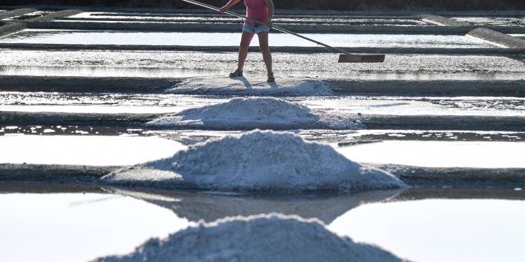 A Guérande, les paludiers veillent au grain pendant la récolte de sel