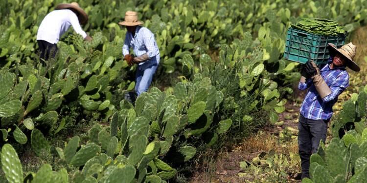 Au Mexique, le cactus pour produire du plastique?