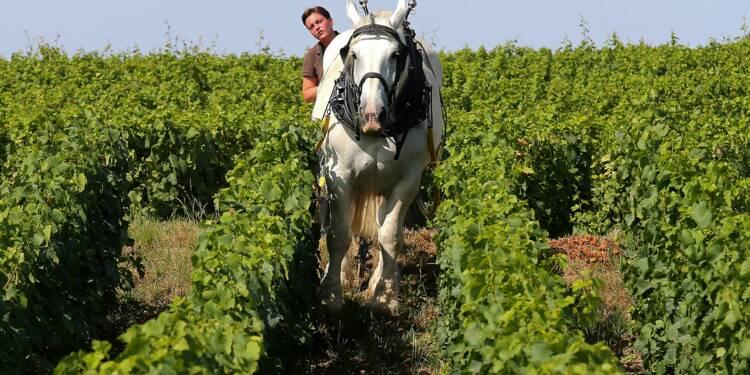Pour la maison de champagne De Sousa, le cheval est l'avenir de la vigne