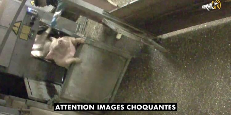 Vidéosurveillance dans les abattoirs: l'Assemblée vote une expérimentation