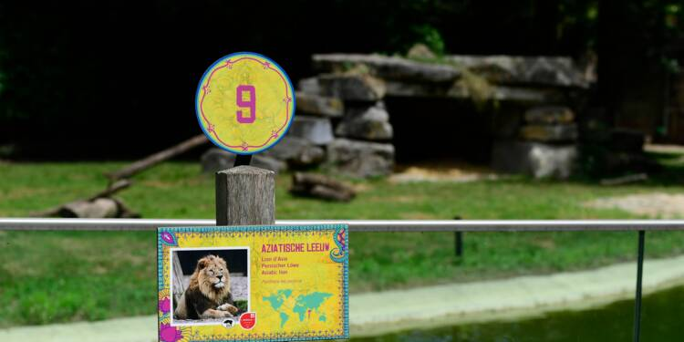 Une lionne abattue dans un zoo belge, les méthodes de la police contestées