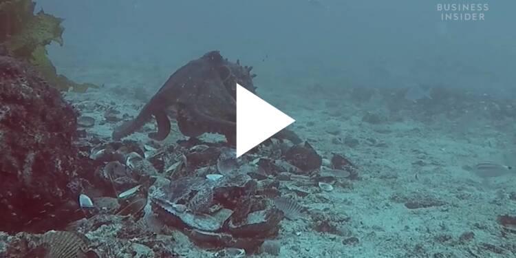 VIDEO: Des scientifiques ont découvert une 'ville' sous-marine peuplée de pieuvres — voici Octlantis